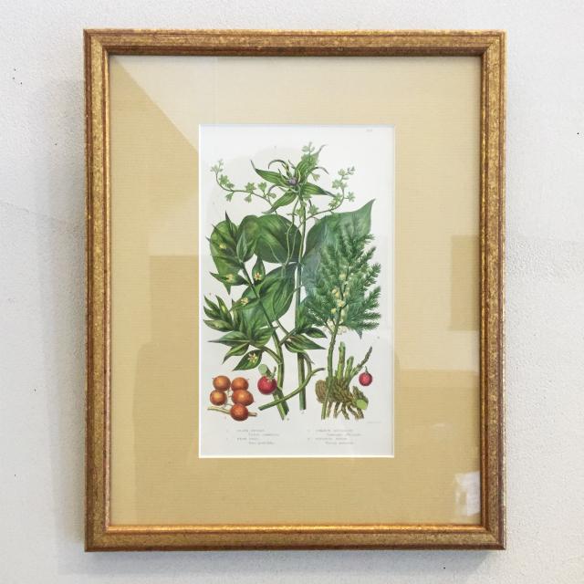 家具、その他「ボタニカルアート「ツル科の植物/ハーブ/アスパラガス/ナギイカダ」(大)」
