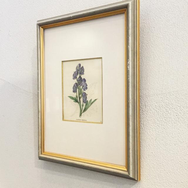 家具、その他「ボタニカルアート「トリカブト」(小)」